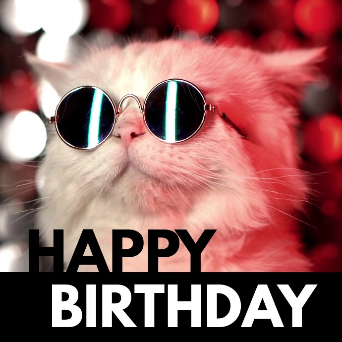 Happy Birthday Cool Cat Sunglasses Funny Wish Template Postermywall