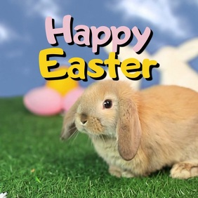 Happy Easter Greeting Video Card Wishes Bunny Egg Lawn