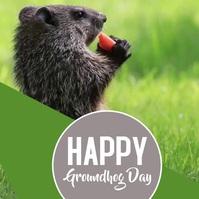 Happy Ground Hog Day Video