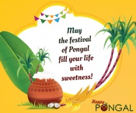 happy pongal wishes transition wallpaper Medium Rectangle template
