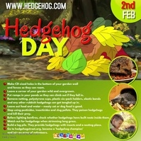 Hedgehog day video1