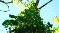 hop tree YouTube Thumbnail template
