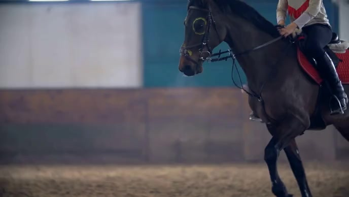 Horse riding video YouTube-miniature template
