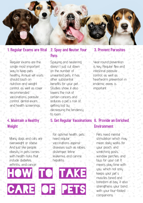 HOW TO TAKE CARE OF PETS A4 template