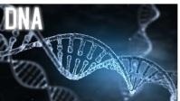 Human DNA videos template