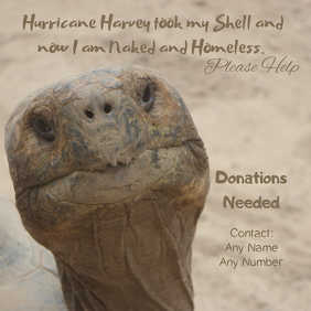 Hurricane Harvey Donation Poster