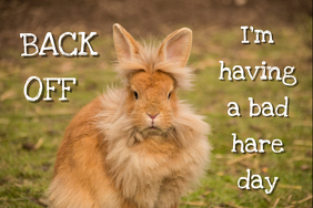I'm having a bad hare day