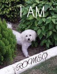 I am Romeo