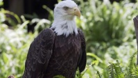 king eagle sitting on branch in the jungle Miniatura de YouTube template