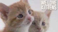 Kittens Digital Display template