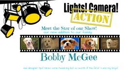 Lights Camera Action: Dog or Cat Collage Imagen Compartida en Facebook template