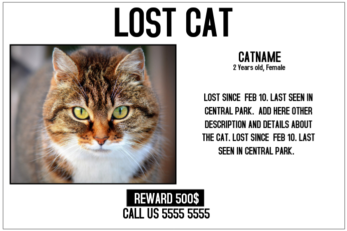 lost cat lost pet landscape poster template postermywall