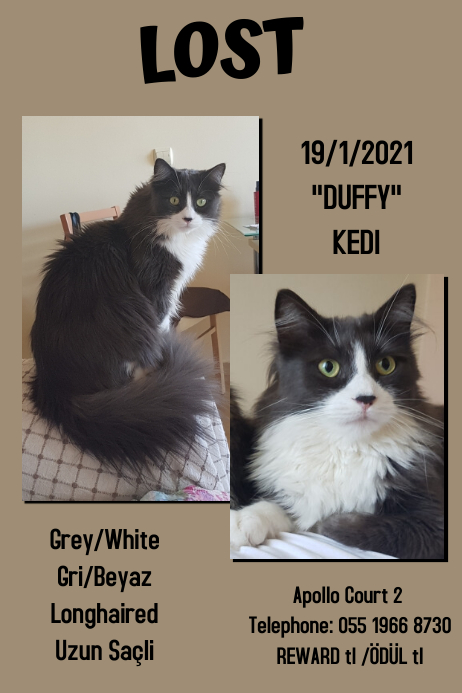 Lost Cat - Reward Duffy Poster template