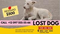 lost dog advirtisement instagram video YouTube 缩略图 template