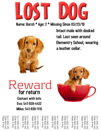 lost dog Flyer (US Letter) template