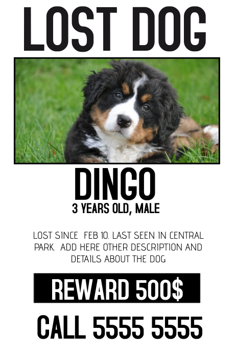 lost dog lost pet color poster template Plakat