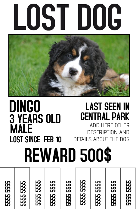 lost dog lost pet color poster template