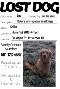 Lost Dog Missing loved one family