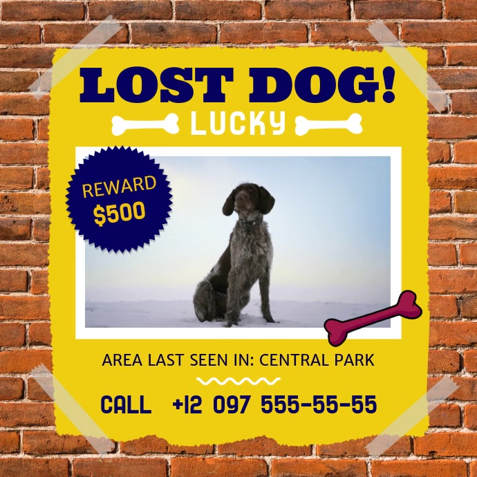 Lost Dog Missing Pet Square Video Persegi (1:1) template