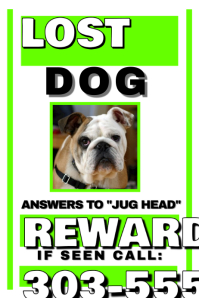 Lost Dog Intended Lost Pet Poster