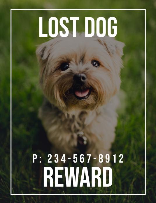 Lost Dog Reward Flyer (US Letter) template