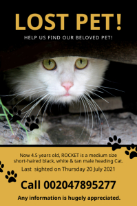 Lost Pet Cat Help Find Poster Template