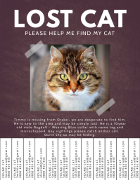 Lost Pet Cat Please Find Flyer Template