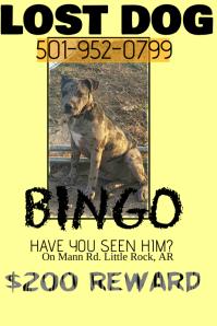 Lost puppy dog