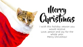 Merry Christmas Greeting Card Video Cat Wish
