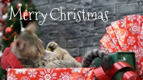 Merry Christmas Greeting Video Cat Funny Gift template