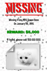 Missing Cat Flyer