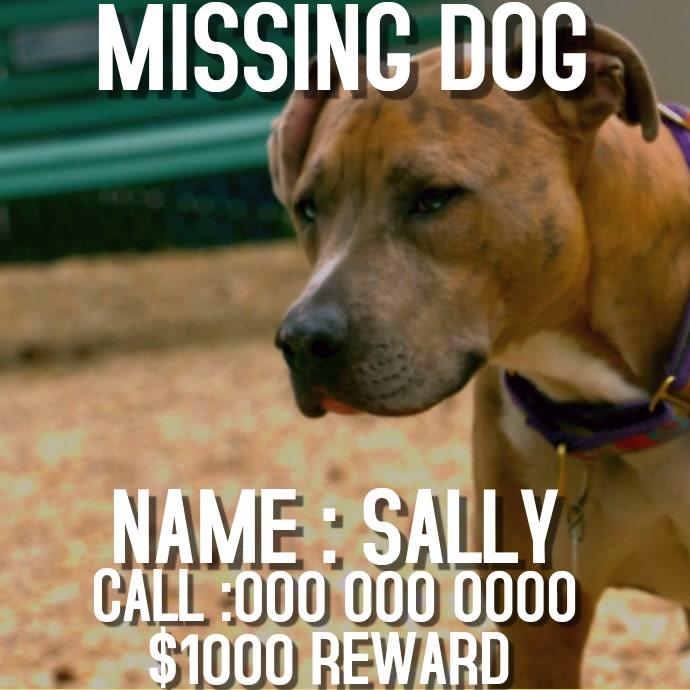 MISSING DOG SOCIAL MEDIA POST
