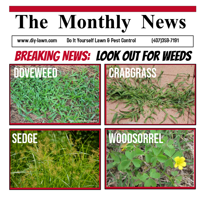 Monthly News Paper Add