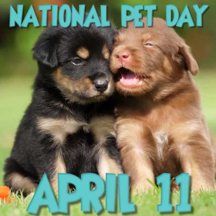 NATIONAL PET DAY Square (1:1) template