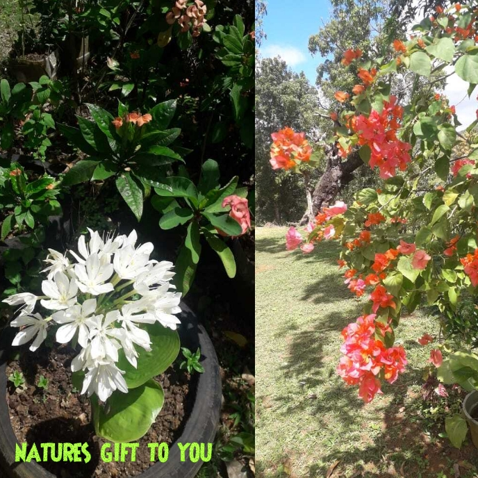 Natures gift to you Pochette d'album template
