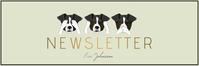 of mail header newsletter template dog