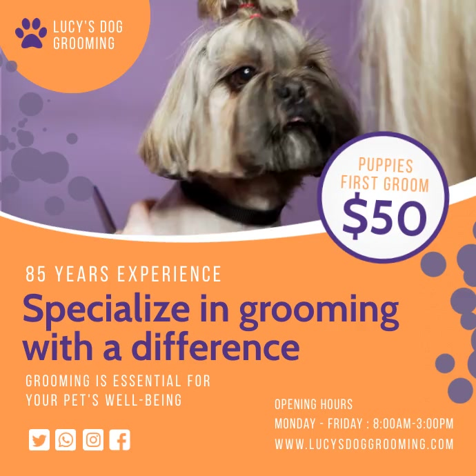 Orange dog grooming services Instagram video Square (1:1) template