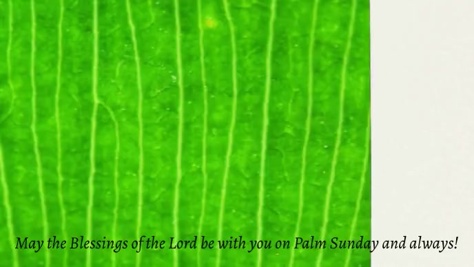 Palm Sunday Template Facebook Cover Video (16:9)