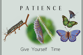 Patience/Life Cycle/Butterfly/Life Changes