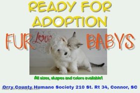 Customizable design templates for dog adoption postermywall sentiment flyer pet adoption similar design templates pronofoot35fo Images