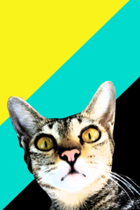 Pet Flyer: Cat