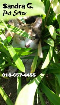 Pet sitter 2 business card