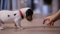 Pet training center puppy with girl video YouTube 缩略图 template