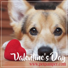 pet valentines day promotion