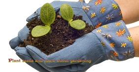 Plant seeds and learn about gardening