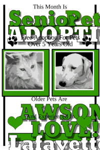 Senior pet Adoption
