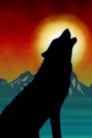 sitting black wolf silhouette of howling sound at sunset or sunrise