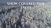 snow covered pine trees winter video Miniatura na YouTube template