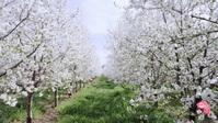 Spring season beautiful flowers video YouTube-miniature template
