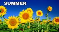 summer Digitalt display (16:9) template